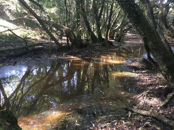 Wharekorino Wetland (Photo Credit: Talitha Wanden, Pūniu River Care)