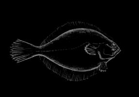 Flounder_fiNAL