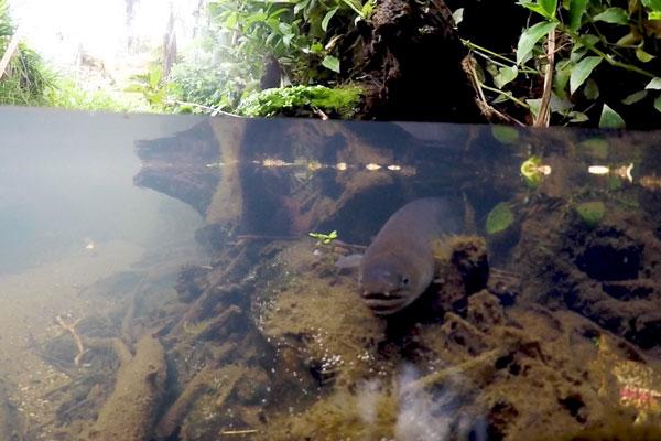 eel_still